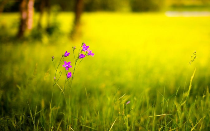 cvetok-pole-leto-priroda