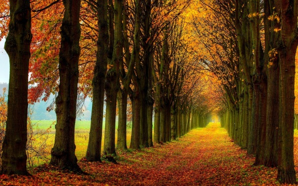 beautiful-nature-scenery-forest-trees-autumn-path.jpg
