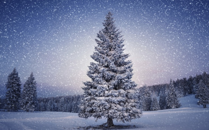 cristmas-tree-543