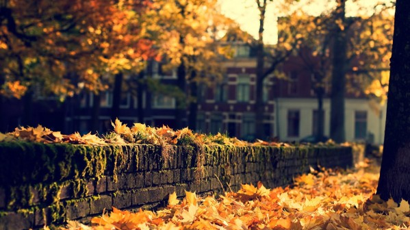 6806272-pretty-fall-wallpaper