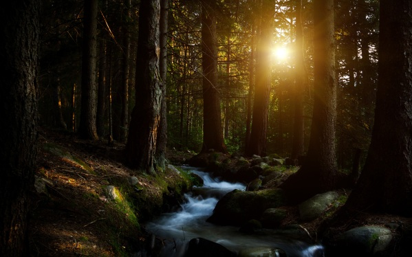 dark-forest-creek-sunlight-1920x1200