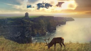 horizon-grass-deer-scotland-nature